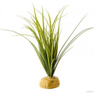 Aquatic Ground Plants, TURTLE GRASS